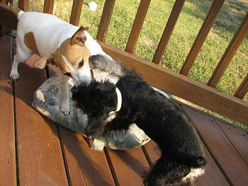 Dogs-img_4532.jpg