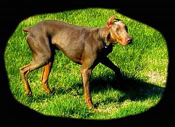 Dogs-dsc09638-25.jpg