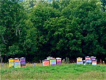 my 40,000 pets-bees.jpg