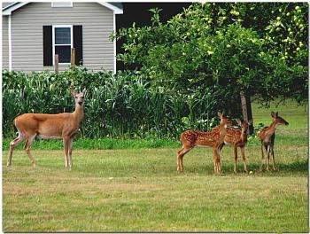Photos of animal antics for your enjoyment.-mother-babies-backyard-apple-tree.jpg