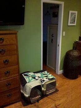 Dog Crate Build-dog-kennel-017.jpg
