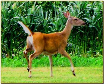 Photos of animal antics for your enjoyment.-deer-taken-drive-.jpg