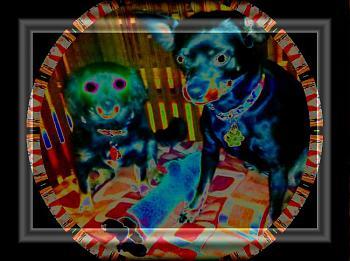 Dog Crate Build-dog-kennel-062.jpg