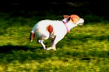 What do you do with your dog in your area?-molly-four-feet-air-hot-pursuit.jpg