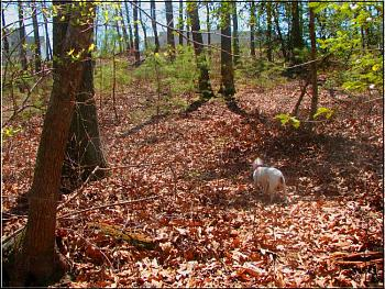 What do you do with your dog in your area?-molly-ravine-behind-house.jpg
