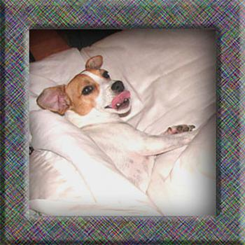 What do you do with your dog in your area?-molly-sticking-tongue-out-me-640.jpg