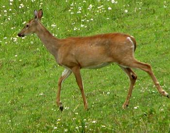 Just animal photography......photos you have taken!-deer-1.jpg