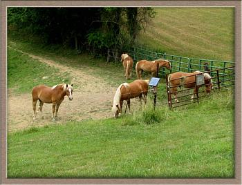 Just animal photography......photos you have taken!-palaminos-west-virginia-farm.jpg