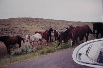 Just animal photography......photos you have taken!-wild-horse-herd-valley-little-bighorn.jpg