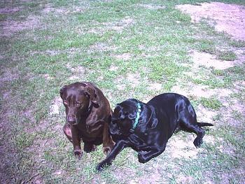 Dogs-8-31-2007-095.jpg