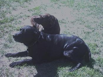 Dogs-8-31-2007-117.jpg