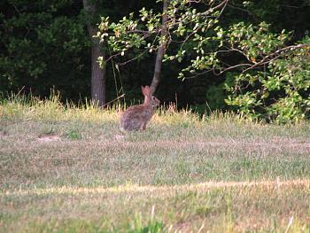 Just animal photography......photos you have taken!-rabbit.jpg