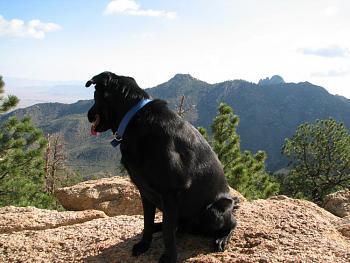 Opie and me went hiking!!-opie-me-081.jpg