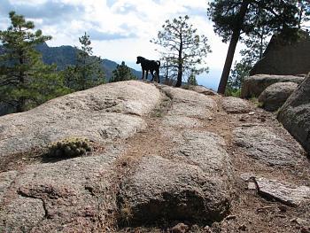 Opie and me went hiking!!-opie-me-115.jpg