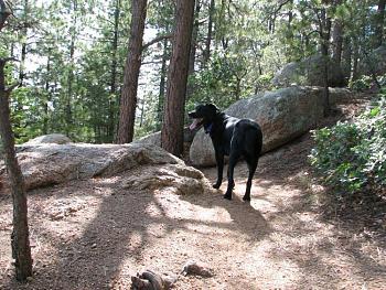 Opie and me went hiking!!-opie-me-146.jpg