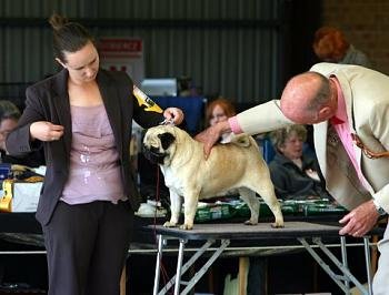 Good read and a BBC special-loganpugshow.jpg