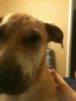 Lets see your pet pics!-image-2015211728.jpg