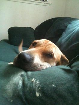 Lets see your pet pics!-image-1814589020.jpg