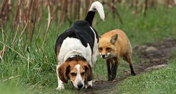 World's worst hunting dog!-dog.jpg