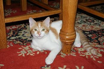 Lets see your pet pics!-kitty-3.jpg