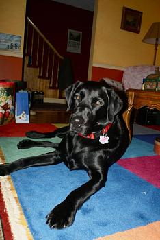 Lets see your pet pics!-doggy-2.jpg