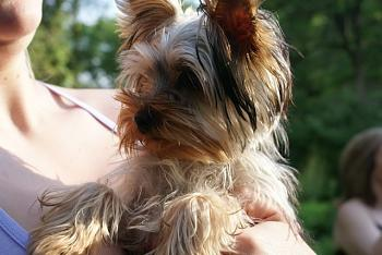 Lets see your pet pics!-doggy-3.jpg