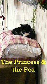 Lets see your pet pics!-princess-pea.jpg