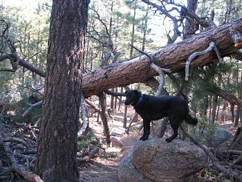 Lets see your pet pics!-hike-007.jpg