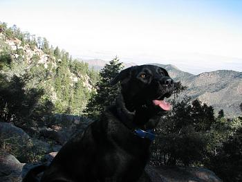 Lets see your pet pics!-hike-046.jpg