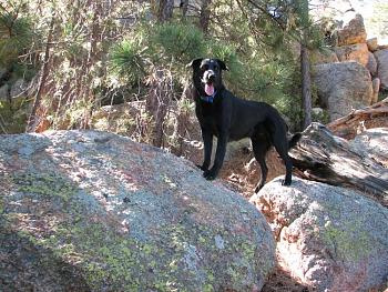 Lets see your pet pics!-hike-133.jpg