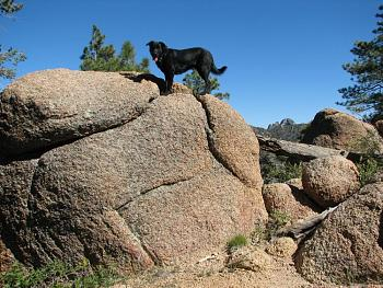 Lets see your pet pics!-hike-154.jpg