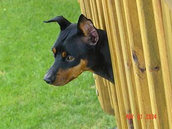 Dogs-dsc08313_fixed-1-.jpg