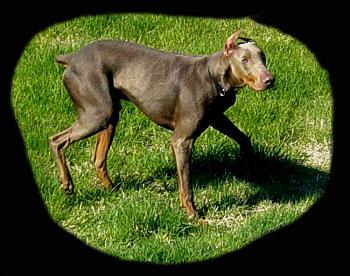 Dogs-dsc09638-copy.jpg