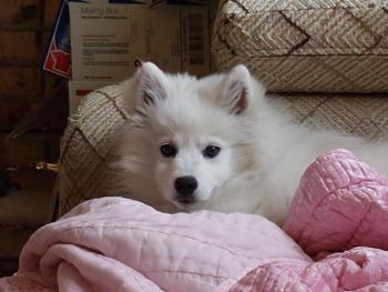 Dogs-dsc00122.jpg