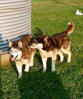 Dogs-puppy-tippy.jpg