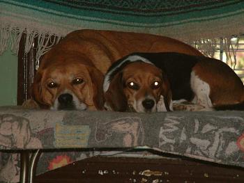 Dogs-summer2007-33-.jpg