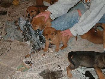 Dogs-puppys-1.jpg-2.jpg