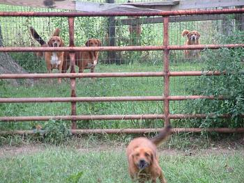 Dogs-dogs-fence-005.jpg