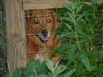 Dogs-june232009-91-.jpg