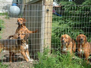 Dogs-maryjoerosyelroy.jpg