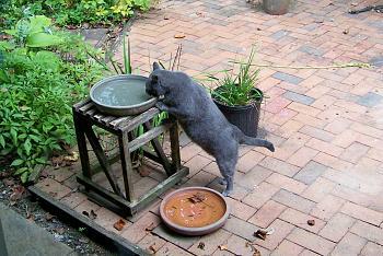 Tomas Drinking Water-100_1246.jpg