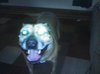 Dogs-0605001941.jpg