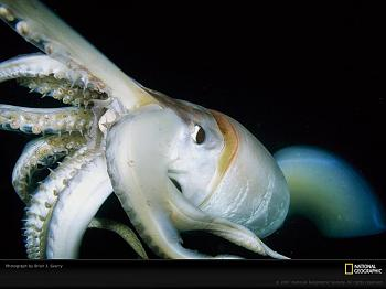critters-giant-squid-close-up-760231-lw.jpg