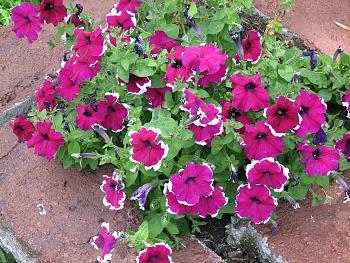 flowers-005.jpg