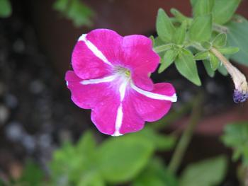 flowers-008.jpg