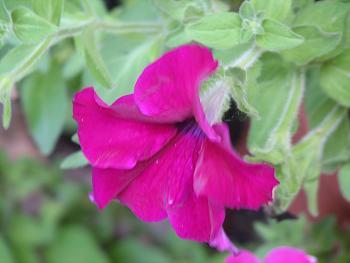flowers-010.jpg