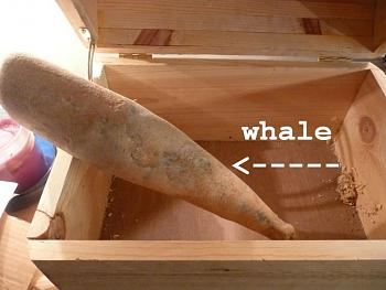 The Google Free Picture Thread-whale.jpg