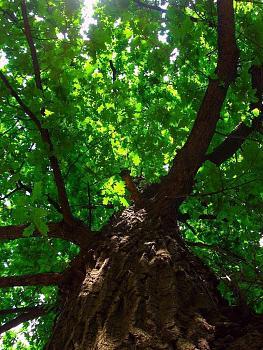 The Google Free Picture Thread-tree-bark.jpg