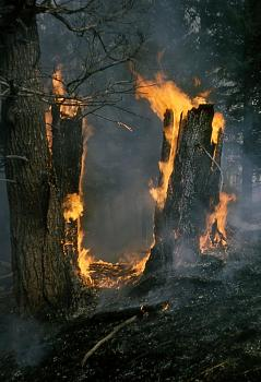 Fire!-1275.jpg