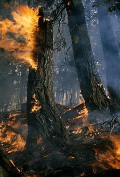 Fire!-1276.jpg
